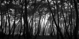 나에게 다가온 소나무 시즌5.5 (4)