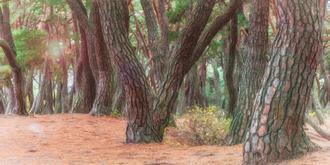 나에게 다가온 소나무 시즌5.5 (5)