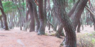 나에게 다가온 소나무 시즌5.5 (6)
