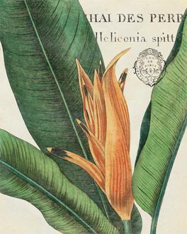 Botanique Tropicale II