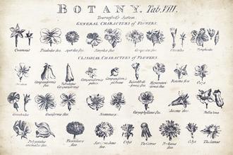 Botany Tab VIII Indigo and White