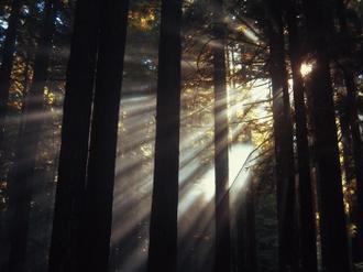 Sunlight Through the Woods II