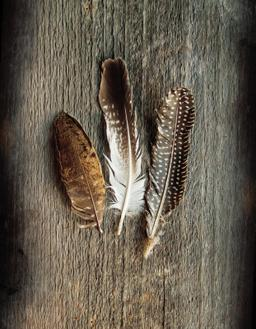 Feather Collection II