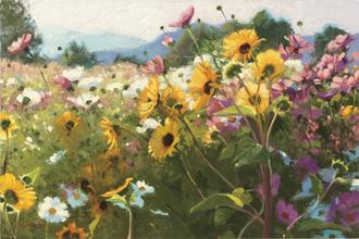 Cosmos and Sunflowers