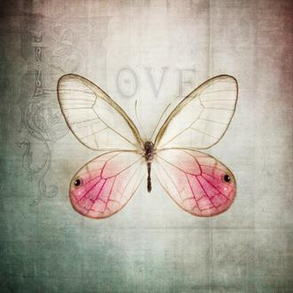 French Butterfly I