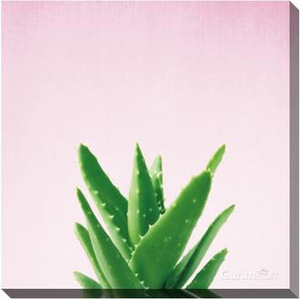 Succulent Simplicity V on Pink