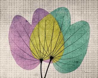 SoHo Polka Orchid