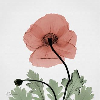 Poppy Marsala