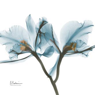 OrchidBLue