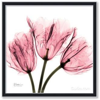 Tulips Laugh