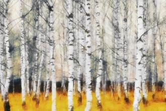 Saffron Timber