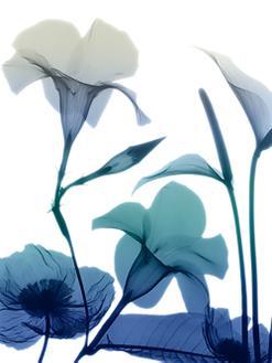 Morning Bloom I