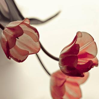 3 Tulips