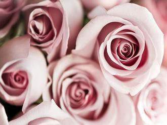Blush Tone Bouquet