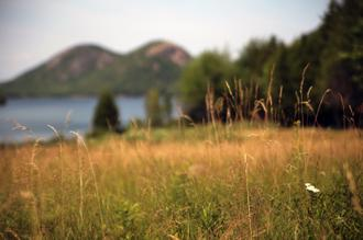 Grassy Field I