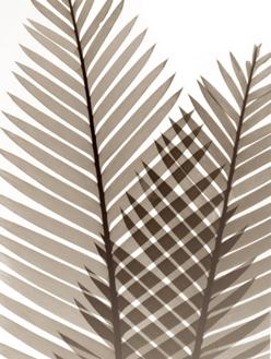 Earthly Fern I