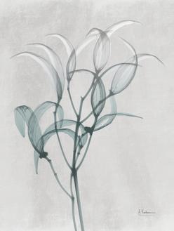 Everald Oleander Bush