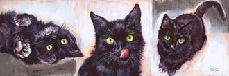 Black Cats Classic
