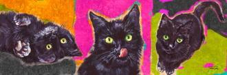 Black Cats Pop