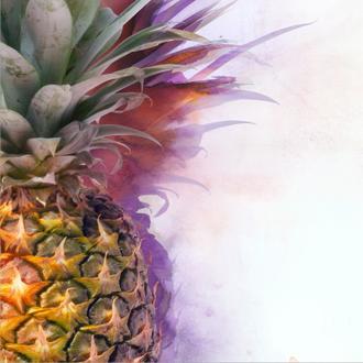 Pineapple Tri I crop