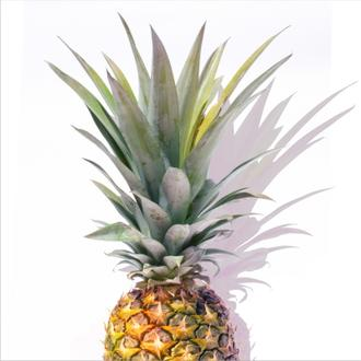 Pineapple Tri II crop