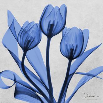 Midnight Tulips II