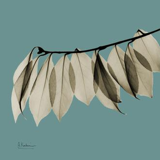 Leaf Blue IV