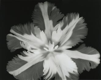 Big Blossom II