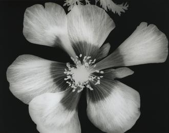 Big Blossom III