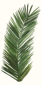 Tropical Breeze Leaves V