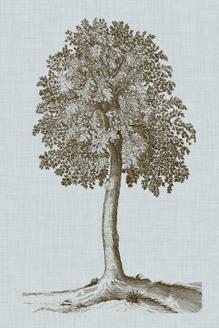 Antique Tree in Sepia II