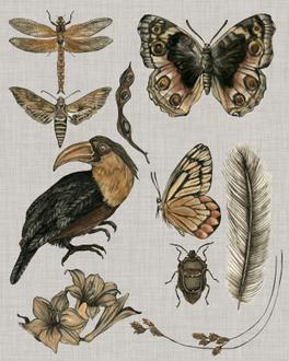 Nature Studies I