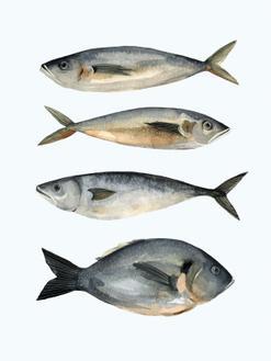 Four Fish I