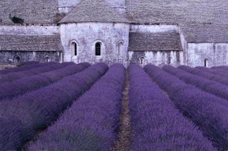 Lavender Abbey