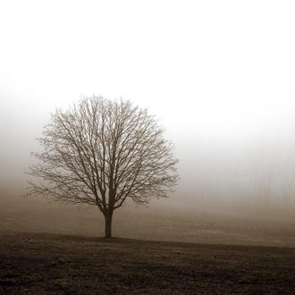 Tree in Mist I