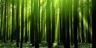 Green Woods III