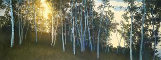 Hillside Birches