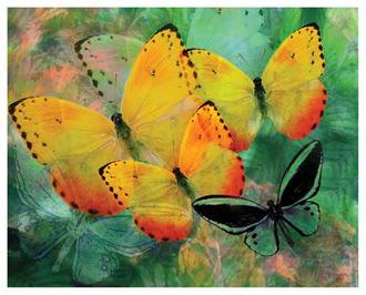 Yellow Butterfly Fantasy