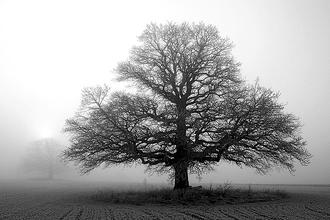 Tree in Mist II