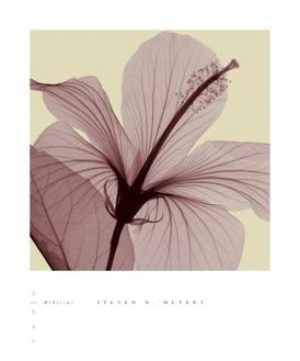 Hibiscus (small)