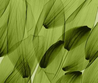 Tulip Petals, Green