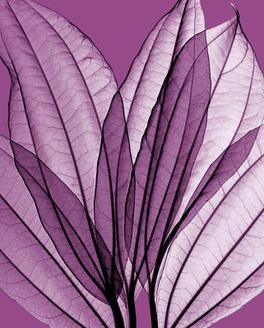 Leaf Bouquet, Orchid