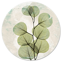 Eucalyptus Agedstone
