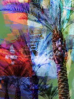 Desert Palm Abstract