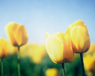 Sunny Blooms II