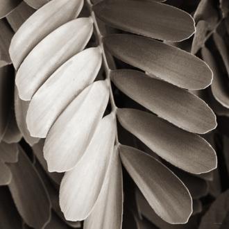 Tropical Plant I Crop