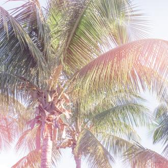 Dream Palm II