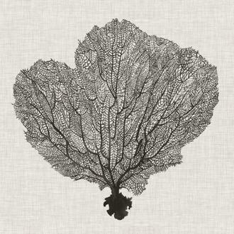 Shadow Sea Fan I