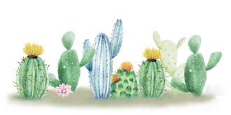 Cactus Dreaming