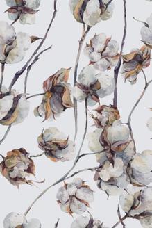 Cotton I